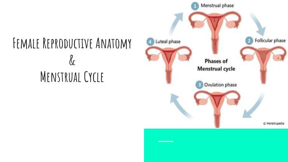 Menstrual Health-2